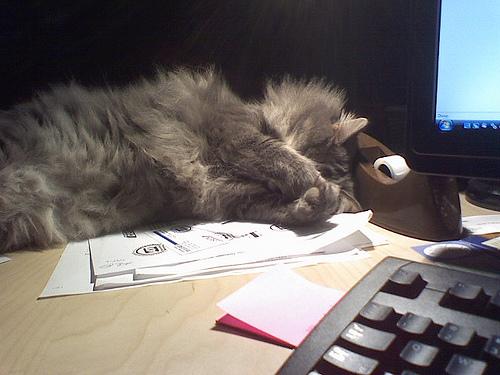 Max On A Desk